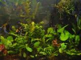 Рибки, акваріуми Акваріуми і устаткування, ціна 2600 Грн., Фото