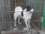 Собаки, щенята Невідома порода, ціна 1700 Грн., Фото