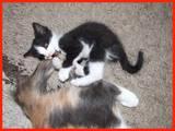 Кішки, кошенята Різне, ціна 10 Грн., Фото