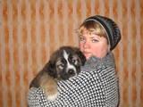 Собаки, щенки Московская сторожевая, цена 1300 Грн., Фото