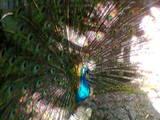 Попугаи и птицы Разное, цена 600 Грн., Фото