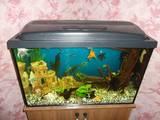 Рибки, акваріуми Акваріуми і устаткування, ціна 1500 Грн., Фото