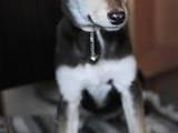 Собаки, щенки Неизвестная порода, цена 50 Грн., Фото