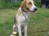 Собаки, щенки Разное, цена 8000 Грн., Фото