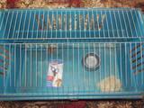 Гризуни Клітки та аксесуари, ціна 450 Грн., Фото