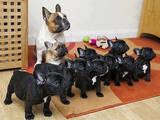 Собаки, щенята Спаровування, ціна 200 Грн., Фото