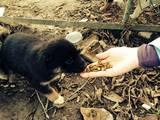Собаки, щенята Різне, ціна 2 Грн., Фото