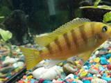 Рибки, акваріуми Рибки, ціна 1 Грн., Фото