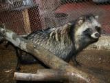 Животные Разное, цена 3000 Грн., Фото