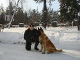 Собаки, щенки Американский акита, цена 200 Грн., Фото