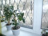 Квартиры Полтавская область, цена 570000 Грн., Фото