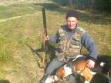 Собаки, щенки Русская борзая, цена 6000 Грн., Фото