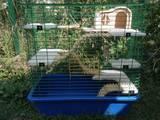 Тварини Різне, ціна 700 Грн., Фото