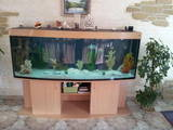 Рибки, акваріуми Акваріуми і устаткування, ціна 5500 Грн., Фото