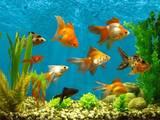 Рыбки, аквариумы Установка и уход, цена 250 Грн., Фото