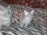 Кошки, котята Разное, цена 10 Грн., Фото