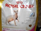 Тварини Різне, ціна 250 Грн., Фото