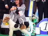 Собаки, щенки Занятия, тренировки, цена 300 Грн., Фото