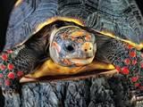 Животные Экзотические животные, цена 23000 Грн., Фото