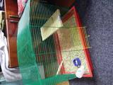 Гризуни Шиншили, ціна 700 Грн., Фото
