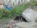 Собаки, щенята Безпорідна, ціна 0.10 Грн., Фото
