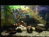 Рыбки, аквариумы Рыбки, цена 80 Грн., Фото