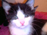 Кішки, кошенята Невідома порода, ціна 10 Грн., Фото