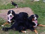 Собаки, щенки Приюты и гостиницы, цена 80 Грн., Фото