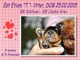 Собаки, щенята Ердельтер'єр, ціна 6500 Грн., Фото