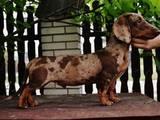 Собаки, щенки Неизвестная порода, цена 500 Грн., Фото