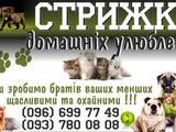Собаки, щенки Услуги парикмахера, мойка, цена 100 Грн., Фото