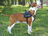 Собаки, щенята Бультер'єр, ціна 10000 Грн., Фото