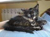 Кошки, котята Неизвестная порода, цена 10 Грн., Фото