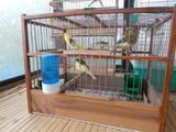 Папуги й птахи Канарки, ціна 400 Грн., Фото