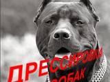 Собаки, щенята Заняття, тренування, ціна 50 Грн., Фото
