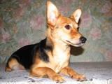 Собаки, щенки Неизвестная порода, цена 499 Грн., Фото