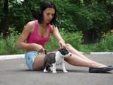 Собаки, щенки Бультерьер, цена 3999 Грн., Фото