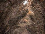 Фото й оптика Послуги фотографів, ціна 3000 Грн., Фото