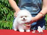 Собаки, щенки Разное, цена 40000 Грн., Фото