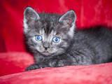 Кішки, кошенята Невідома порода, ціна 20 Грн., Фото