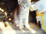 Кошки, котята Разное, цена 50 Грн., Фото