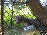Тварини Різне, ціна 1000 Грн., Фото