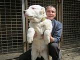 Собаки, щенки Среднеазиатская овчарка, цена 1000 Грн., Фото
