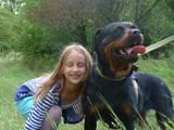 Собаки, щенята Ротвейлер, ціна 7999 Грн., Фото