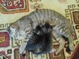 Кішки, кошенята Невідома порода, Фото
