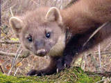 Тварини Різне, ціна 800 Грн., Фото