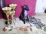Собаки, щенки Левретка, цена 13000 Грн., Фото