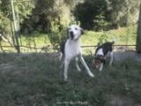 Собаки, щенята Різне, ціна 5000 Грн., Фото