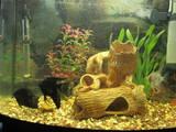 Рыбки, аквариумы Аквариумы и оборудование, цена 2000 Грн., Фото