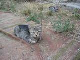 Кошки, котята Приюты и гостиницы, Фото